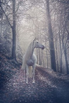 Misty woods mare, like a dream horse.