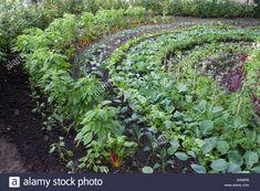 The Vegetable Garden, The Eden Project, Cornwall - Potager (ornamental vegetable/kitchen garden)