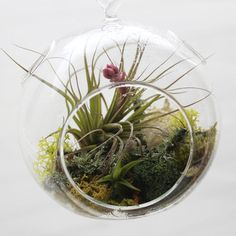 Attirant Air Garden Globe By Moss Rock Garden