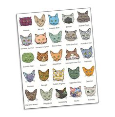 Contempo Kitty Cat Breed Poster