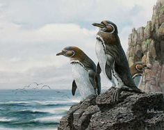 Galapagos Penguins Cross Stitch Pattern