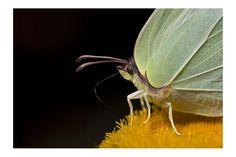 #Butterfly.