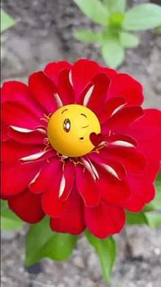 The perfect Emoji Flowers YouAreAwesome Animated GIF for your conversation. Discover and Share the best GIFs on Tenor. Good Morning Flowers, Good Morning Gif, Good Morning Images, Good Morning Quotes, Friday Morning, Beautiful Gif, Beautiful Flowers, Beautiful Pictures, Images Emoji