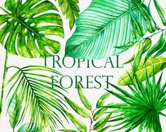 Tropical watercolor leaves. Handpainted clipart foliage