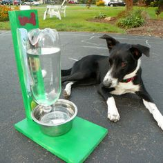 The Awesomest Coolest Easiest Water Bowl for DOGS & CATS! Second Hope Circle helps special needs pets in Ontario find homes through promotion, education and funding! www.secondhopecirle.org
