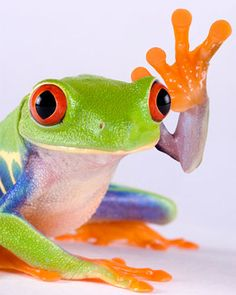 Froggie high five (well, four actually!)