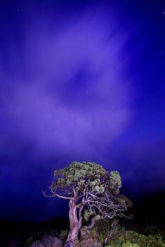 圓柏吐煙 Lovely clouds @ Mountain Hehuan