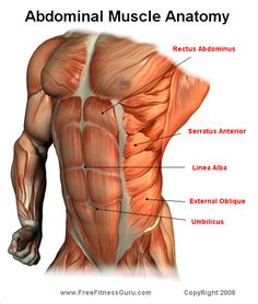 ab muscle anatomy. Now, how to effectively work 'em ...