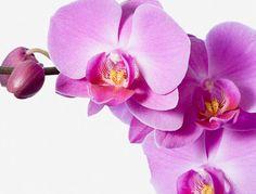 Comment entretenir les orchidées Plante Carnivore, White Orchids, Photo Colour, All Pictures, Nature Photos, Beauty Nails, Framed Artwork, Planters, Bloom