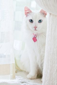 """""""Cats are like guests you're not quite sure of and are always trying to please."""" --Mary Wells Lawrence"""