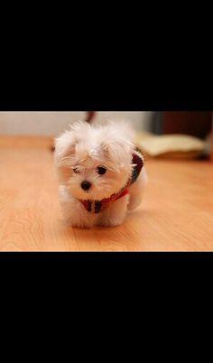 Baby puppy