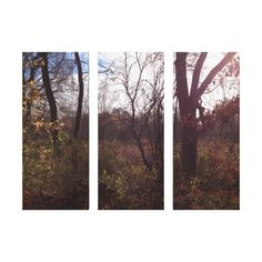 The Fall Stretched Canvas Prints