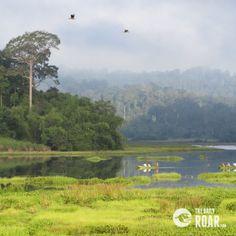 Cat Tien National Park #vietnam #park #national #cattien #asia #wildlife