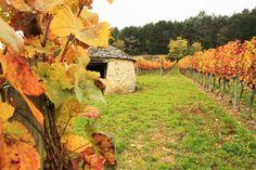 Les vignes de Côte d'Or par Jean-Michel D.