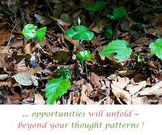 ... #opportunities will unfold ~ beyond your #thought_patterns ! ( #Samara )