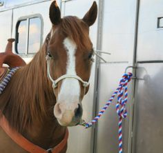 9 Total Cases of EHV-1 Confirmed in Minnesota, Wisconsin, Iowa | Rate My Horse PRO