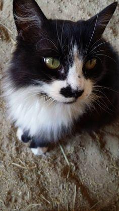 Meet Oreo the barn cat that lurks around the place I work. http://ift.tt/2vKTNNI