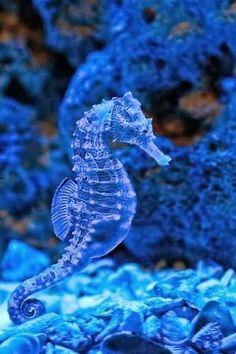 10 Sea Animals List Of Popular Ideas Underwater Animals, Underwater Creatures, Underwater Life, Beautiful Sea Creatures, Deep Sea Creatures, Animals Beautiful, Aquarium Marin, Sea World, Ocean Life