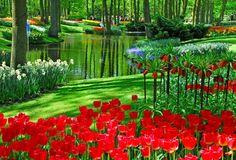 Keukenhof Garden - Holanda.