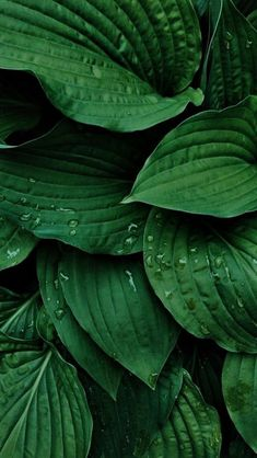 Nature Photography Leaves Plants Best Ideas - Photography, Landscape photography, Photography tips Nature Photography Quotes, Nature Photography Flowers, Leaf Photography, Background For Photography, Landscape Photography, Flowers Nature, Photography Ideas, Green Leaf Wallpaper, Plant Wallpaper