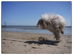 Dances with sands / Die mit dem Sand tanzt — Blogging Julchen auf Föhr