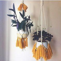 "174 Me gusta, 9 comentarios - Jo Jansen (@jojansen_co) en Instagram: ""Aren't these plant hangers by @forageandlace jungalicious??!  #macrameinspiration…"""