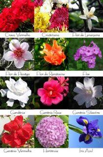 AÇUCENA ARTE FLORAL: Flores da Estação
