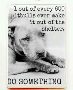 Sad but true. Adopt or foster a shelter pet. The only no kill shelter around greenville sc will not accept any pitbulls or pitbull mixes; just because they were born a pitbull! They are all sentenced to die as soon as one is born without a home.
