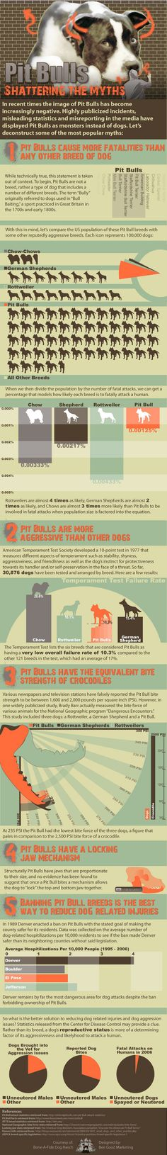 Are pit bulls dangerous? The truth behind the media stories.  #pitbull #infographic
