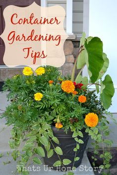 Container gardening, study the gardening post article number 5525712706 to adding plants in a pot. Png Tattoo, Gardening For Beginners, Gardening Tips, Balcony Gardening, Container Gardening Vegetables, Garden Container, Vegetable Gardening, Hacks, All Nature