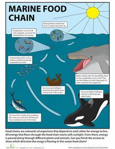 Fourth Grade Science Worksheets: Ocean Food Chain Science Worksheets, Science Lessons, Teaching Science, Science Education, Science Activities, Life Science, Science Ideas, Food Chain Activities, Physical Science
