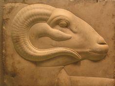 Egyptian ram