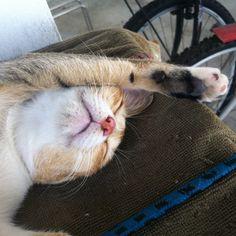 Sleeping like a human being