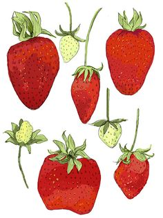 Fresh Strawberries Illustration by Rigel Stuhmiller... #pinhonest