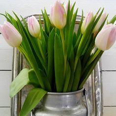 #tulppaani #kevät #liisako #puoti