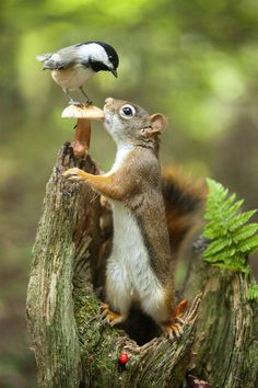 Red you eat my stand by Andre VilleneuveAndre Villeneuve: Photos500px