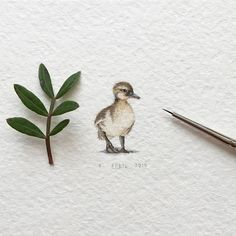 Day 37/120 (10/30 #tiny_creaturesdays series). Duckling Size 15 x 23 mm. -- #duckling #duck #birds #nature #blvart #artfido #art #krasnoyarsk #tinyart #drawings #miniature #watercolor #global_artworks #arts_help #arts_gallery #waterblog #painting #artmaster #supportartists #art_worldly #sharingart #miniart #miniatures #miniatureart #tiny_worlds_living #artsfeatures #artscrowds #artistic_unity_ #top_watercolor
