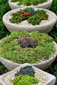 Lenka Tokarska – Google+ Succulents Garden, Google, Plants, Plant, Planets