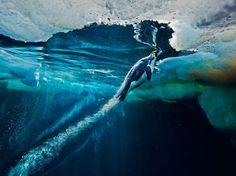 O melhor da National Geographic de 2012 em fotos | O Buteco da Net