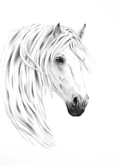 Horse Art Charcoal Drawing White Horse Drawing by JaclynsStudio