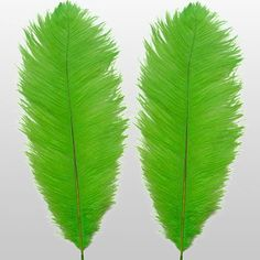 LIME GREEN FEATHERS