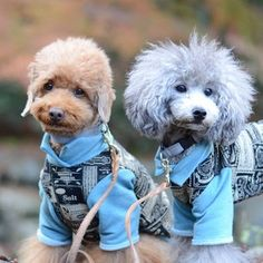 And with dogs wearing clothes, obviously. | The Most Stylish Poodle Brothers In Japan Are Here To Make You Happy