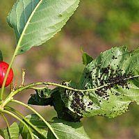 Ale, Plant Leaves, Tricks, Plants, Projects, Garden Plants, Indoor House Plants, Rock Garden Plants, Hardy Perennials