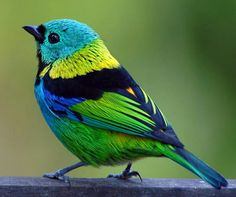 This birdie is so cute! (I know he doesn't have fur, but so what!)