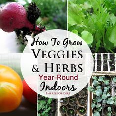 You can grow many herbs and vegetables year-round inside your home.