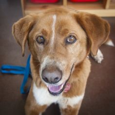 This Old Dog Needs A New Home -- And So Do 74 Of His Friends! #adoptable #dogs