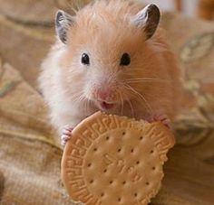 Cute hamster :-)