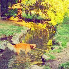 水浴び犬 ・ #perro #dog #犬 #わんこ #🐕 #swim #parque #park #sunnyday #paseo #散歩 #italia  #italy #milano #イタリア #🇮🇹 #旅行好き #verano #summer