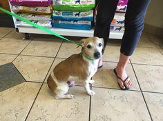 #FOUNDdog 8-24-15 #Williston #Morriston #FL Male Tan/White US LOST DOG REGISTRY uslostdogregistry@gmail.com