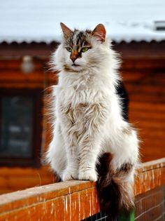 Beautiful cat on a ledge Cute Cats And Kittens, Cool Cats, Kittens Cutest, Pretty Cats, Beautiful Cats, Animals Beautiful, Grand Chat, Cat Oc, Gatos Cats
